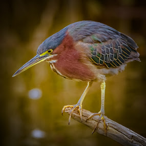by Keith Lowrie - Animals Birds