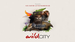 David Attenborough's Wild City thumbnail