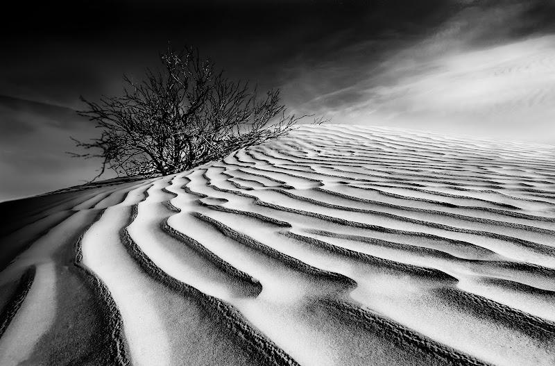 Sahara di Pensatore