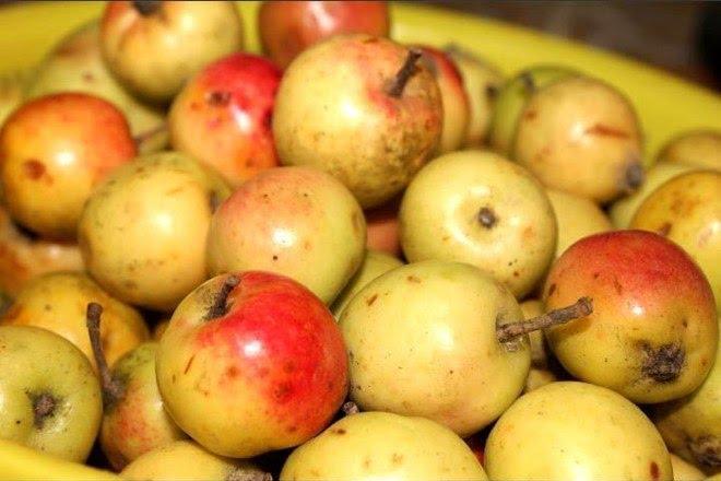 Tứa nước miếng với mùa trái cây Sapa - Ảnh 4