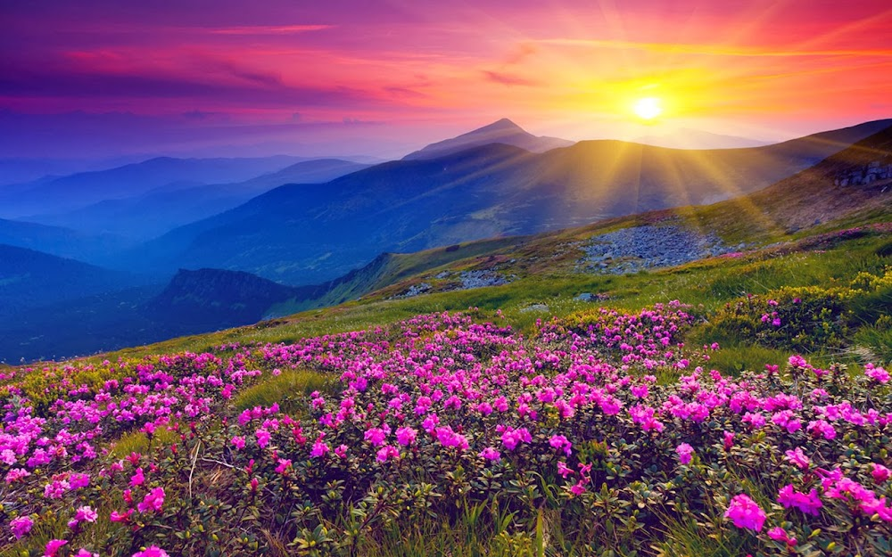 unique_places_in_india_Valley_of_Flowers