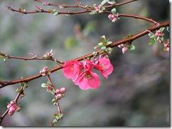 spring branch 2