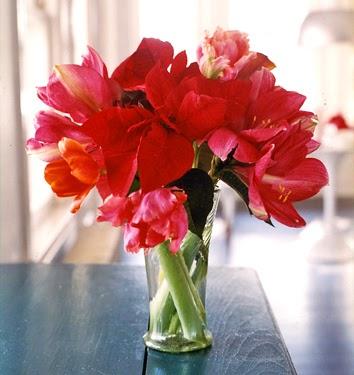 Inspired to flower amaryllis arrangement for Amaryllis christmas decoration