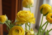 yellow jslander