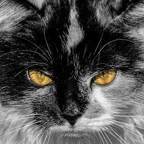 by Jarda Chudoba - Animals - Cats Portraits
