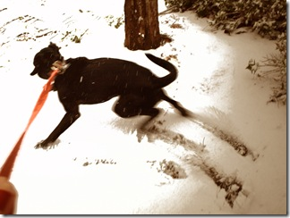 Beau romps in sepia toned snow