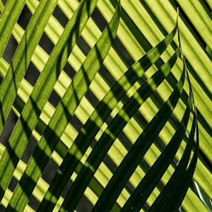 Palm Throngs 2.jpg