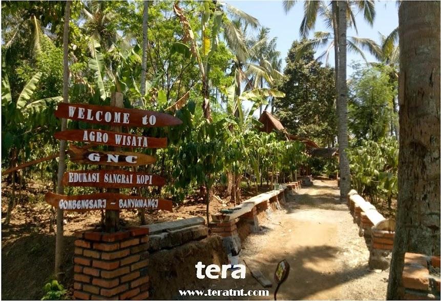 Wisata Agro Perkebunan Kopi Gombengsari Banyuwangi