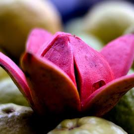 Gauva : Commercial Street. by Vinod Rajan - Food & Drink Fruits & Vegetables ( pink, fruits, fruit, fruits and vegetables, vitamin,  )