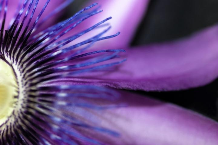 Il Fiore della Passione di shock