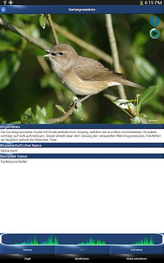 Screenshot for Vogelstimmen Id - Ruf + Gesang in Hong Kong Play Store