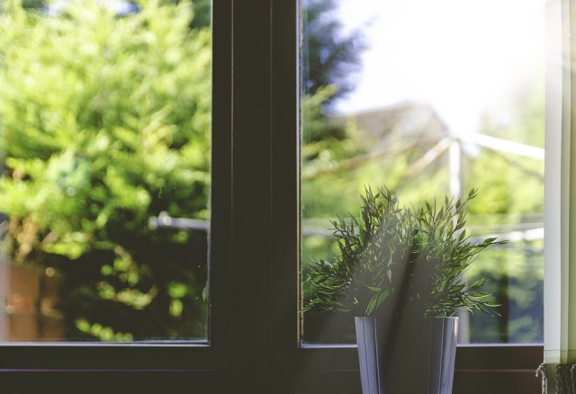 Plant, Pot Plant, Sunbeams, Window