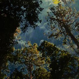Moonlight by Edward Gold - Digital Art Places ( digital photography, forest, outdoors, nature photo, shining, digital art, nature art, tress,  )
