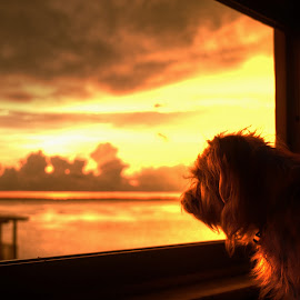 Out The Window by Edward Allen - Animals - Dogs Portraits (  )