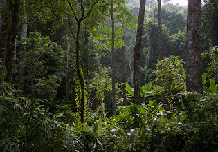 Photo: It's surprisingly hard to photograph a rain forest; one must look for a clearing in order to see any distance.