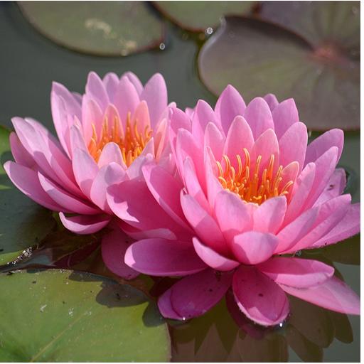 1049花のライブ壁紙 娛樂 App LOGO-APP開箱王