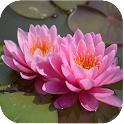 1049 Flowers Live Wallpapers icon