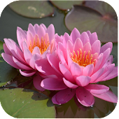 1049 Flowers Live Wallpapers