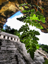 "Photo: ""Templo"" ~ Palenque, Mexico © 2011 Skip Hunt"
