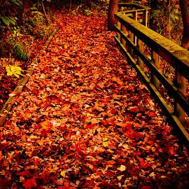 AUTUMN LEAVES  by Jennifer  Loper  - Nature Up Close Leaves & Grasses ( footbridge, fall, leaves, wooden, autumn, missouri )