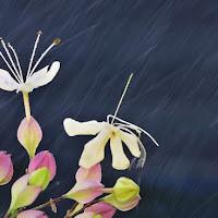 It rains di