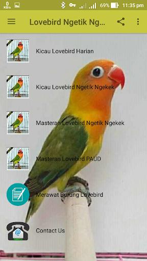 Lovebird Ngetik Ngekek Offline 1.1 screenshots 3
