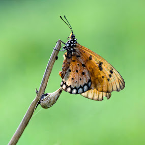 Morning Butterfly by Yan Kebak - Animals Insects & Spiders