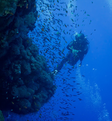 Reef view by Alin Miu - Landscapes Underwater