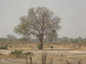 Photo: Ostrich