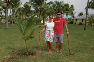 Photo: Tom and Colleen S., Honeymoon palm, Nov. 2011