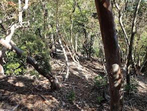 急斜面が続くが手がかりの樹木は多い