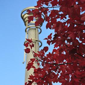 Centennial Park, Atlanta by Wesly Sinulingga - Buildings & Architecture Statues & Monuments ( #atlanta, #falls, #georgia, #leaves, #red )