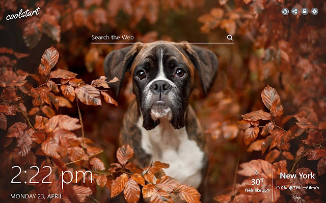 Boxer Hd Wallpapers Dogs And Puppies Theme