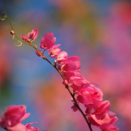Pink buda by Brenda Shoemake - Flowers Flower Buds