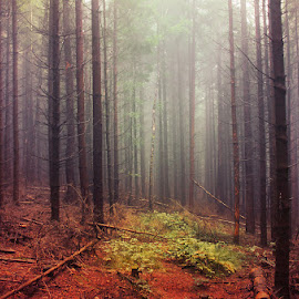 If These Trees Could Talk LXXXVII. by Zsolt Zsigmond - Landscapes Forests ( nature, tree, mystery, fog, autumn, outdoors, scenics, forest, woodland, leaf, landscape, mist )