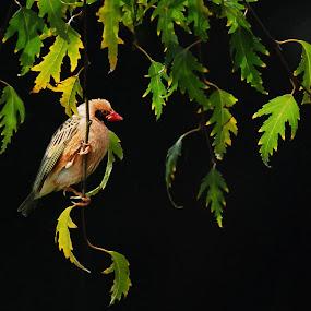 Herbst by Inger Wakolbinger - Animals Birds