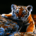 Sad Baby Tiger LWP icon