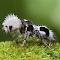 MacroPhotography275-26.png