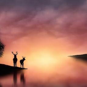 Dawn Light by Jennifer Woodward - Digital Art Places ( animals, dawn, silhouette, sunset, sunrise, landscape, deer )