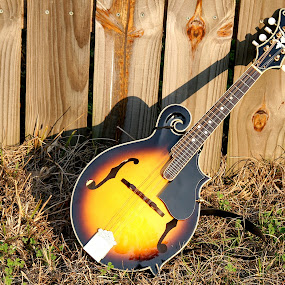 Mandolin by Bill Bettilyon - Artistic Objects Other Objects ( stringed instrument, mandolin )