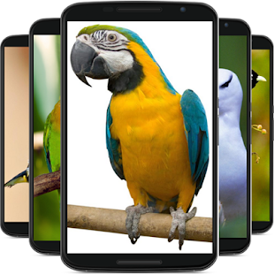 Birds wallpaper - náhled