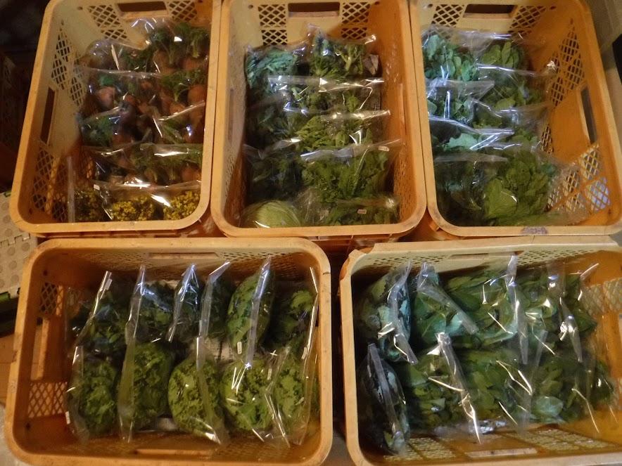 3/12に収穫したお野菜。3件分は配達済です。