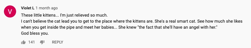 cat comment 1