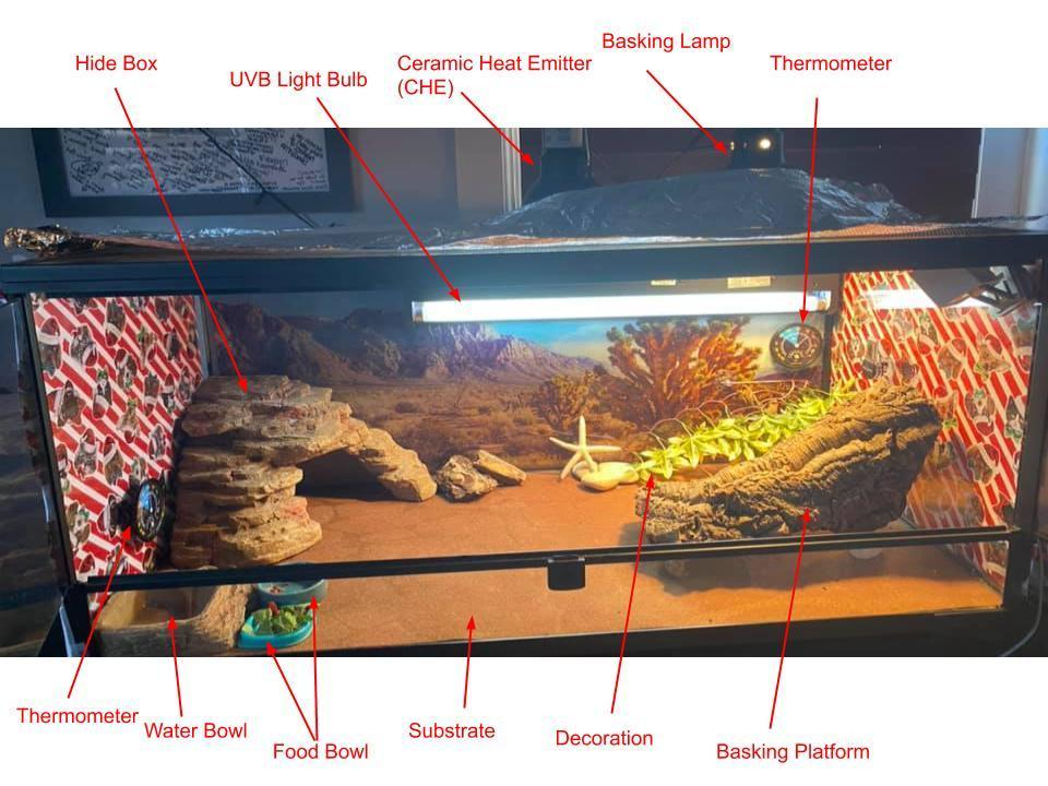The best Bearded Dragon Habitat at a glance