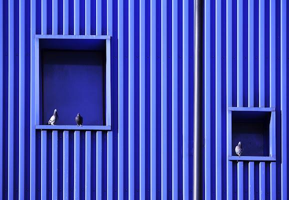 Gli im' piccioni... di Naldina Fornasari