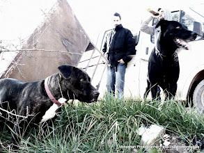 Photo: Doggy style