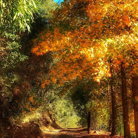 Autumn Lane by Cheryl Hesketh - Instagram & Mobile Android ( autumn )