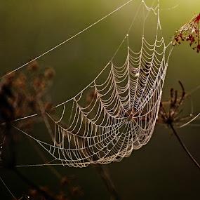*** by Katka Kozáková - Nature Up Close Webs ( cobweb, dew, web, morning,  )