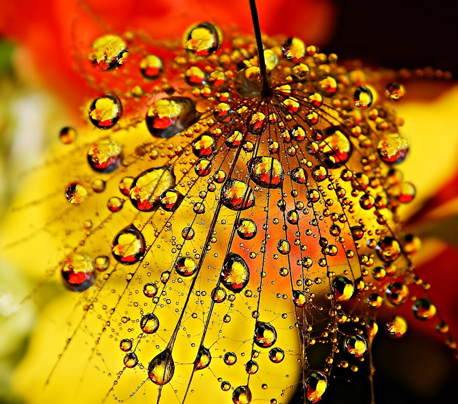 Colorful Prelude by Marija Jilek - Nature Up Close Natural Waterdrops (  )