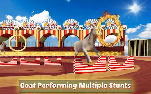 Goat-Monkey-Stunts 9